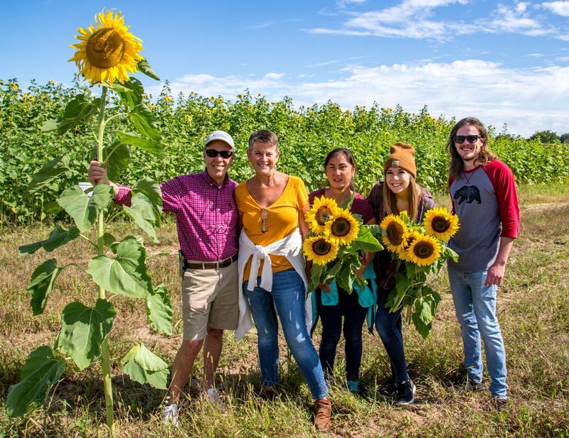 Sunflower Spectacular 2018