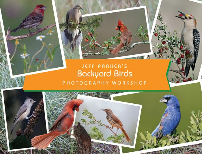 BACKYARD BIRDS ~ Photography Workshop