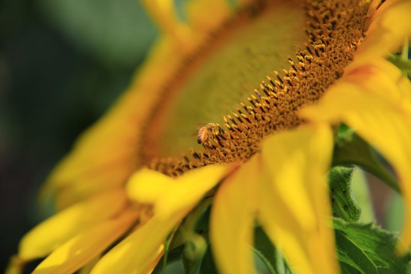 Pairing Adventure: Sunflowers and Soulfood