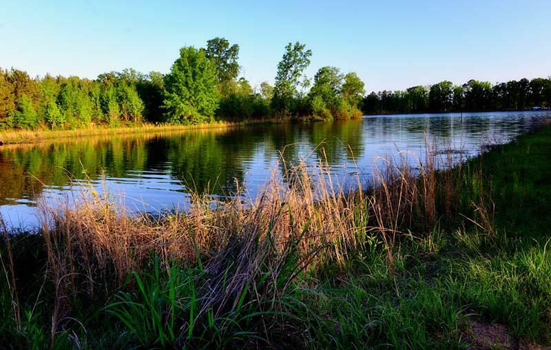 Adventure Birding Series:  Lake Ray Hubbard Kayak Tour