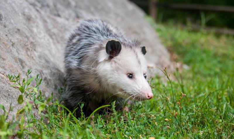 Meet the Animals: Marvelous Mammals